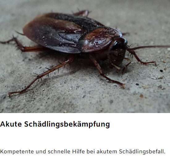 akuter Schädlingsbefall bei 74385 Pleidelsheim